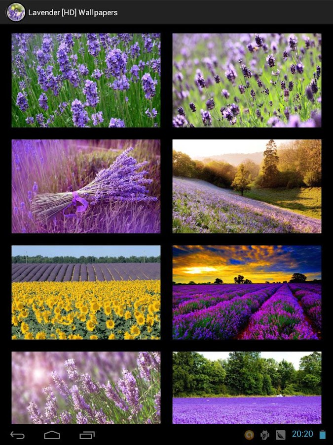Lavender [HD] Wallpapers - screenshot