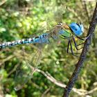 Dragonfly / Vretence