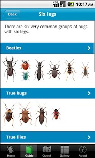 Bugs Count- screenshot thumbnail
