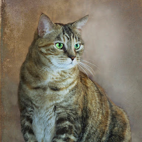 Tabby cat by Diana Gunning - Animals - Cats Portraits ( cat, tabby cat, nature, pet, feline, kitty, animal )