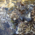 Sea sponge / Morska spužva