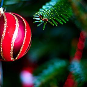 Merry Christmas 2 by Mark Airey - Public Holidays Christmas ( tree, christmas, d7000, 50mm, beads, decorations, nikon, bokeh )