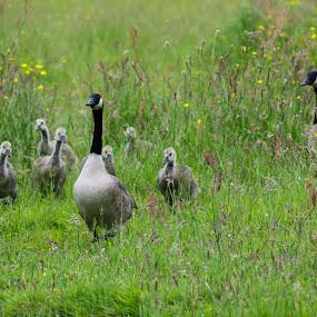 by Jo Darlington - Novices Only Wildlife