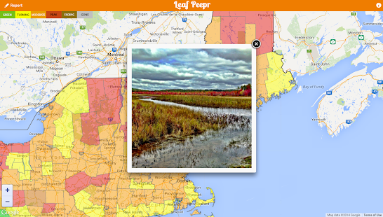 Foliage Leaf Peepr - screenshot thumbnail
