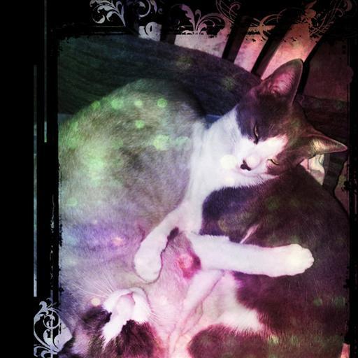Yng Yang Cat LWP FREE LOGO-APP點子