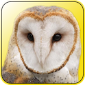 Magic Owl icon