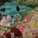 Tailbar lionfish