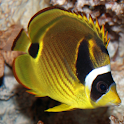 Marine Aquarium Fish 2 FREE icon