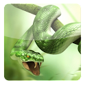 2.Snake Fight Live Wallpaper