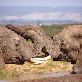 by Linda Jansen van Rensburg. - Animals Other Mammals