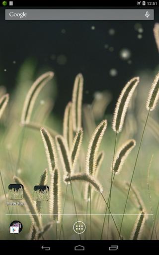 【免費個人化App】zz[Unpublish]Bristle Grass-APP點子