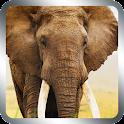 象のライブ壁紙3D icon