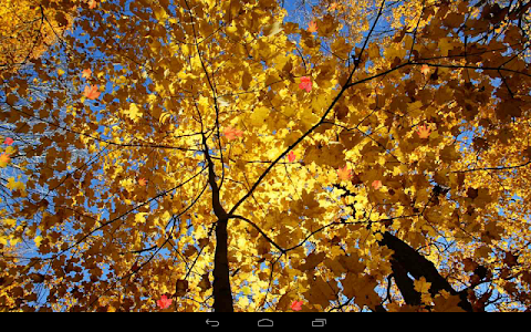 Autumn Wallpaper screenshot 8