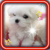 Cute Puppy Best live wallpaper