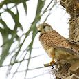 Qatar's Biodiversity