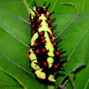 Caterpillar of Common Mime