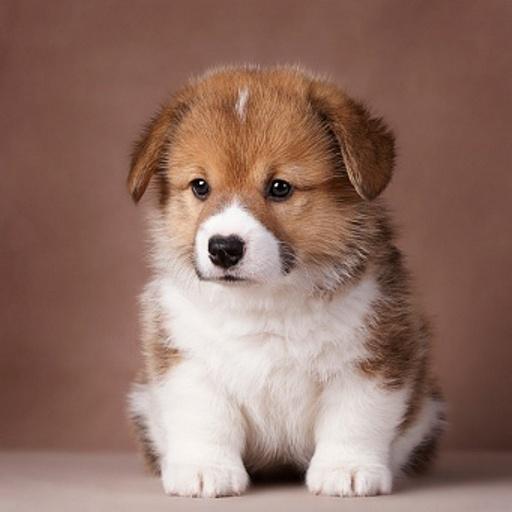 玩個人化App|可愛的小狗免費|APP試玩