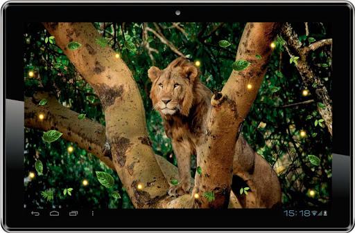 【免費個人化App】Lion Wild Hunt live wallpaper-APP點子