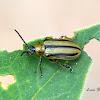 Western Striped Cucumber Beetle