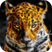 Scintillating Leopard Live