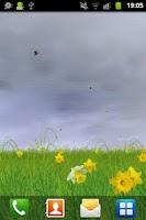 Screenshot of Daffodils Free Live Wallpaper