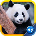 My First Zoo: Sight & Sounds icon
