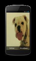 Screenshot of Dog licking screen HD LWP