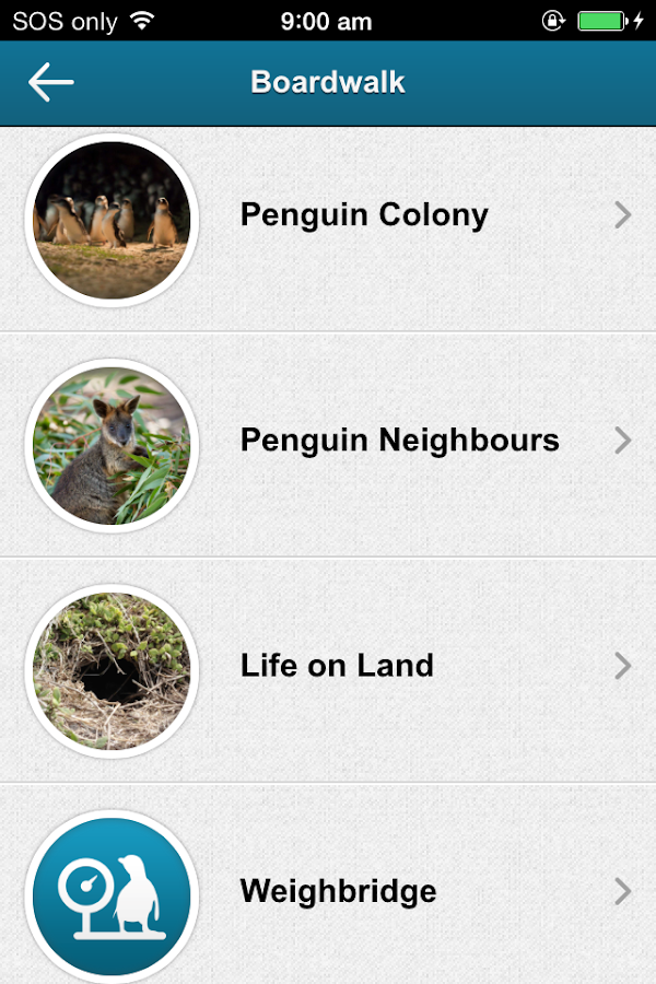 Penguin Parade Phillip Island - screenshot