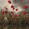 Rain On Poppies Live Wallpaper icon