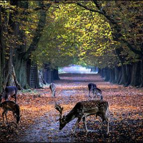 by Dusan Vukovic - Animals Other Mammals