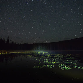 Starry Night by Bonnie Davidson - Landscapes Starscapes ( canon 6d, mountains, light painting, penticton, stars, trees, lake, night, solco lake, landscape, bc, british columbia,  )