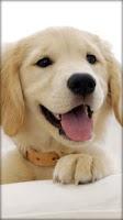 Screenshot of Puppies Live Wallpaper