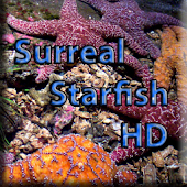 surreal starfish hd lwp