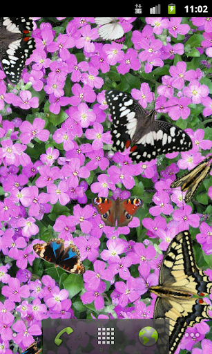 Butterfly Live Wallpaper Free