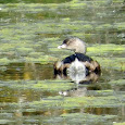 Minnesota Detroit Lakes Wildlife & Plants