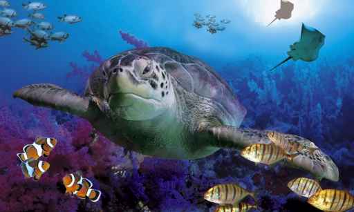 海洋動物壁紙