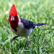 Kaua'i The Graden Island Biodiversity