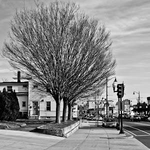 bw trees.jpg