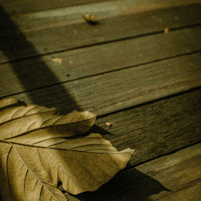 When you feel lonely  by Ken Raven - Nature Up Close Leaves & Grasses