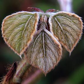by Joel  Pangoe Rihingan - Nature Up Close Leaves & Grasses