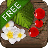 Wild Berries and Herbs FREE