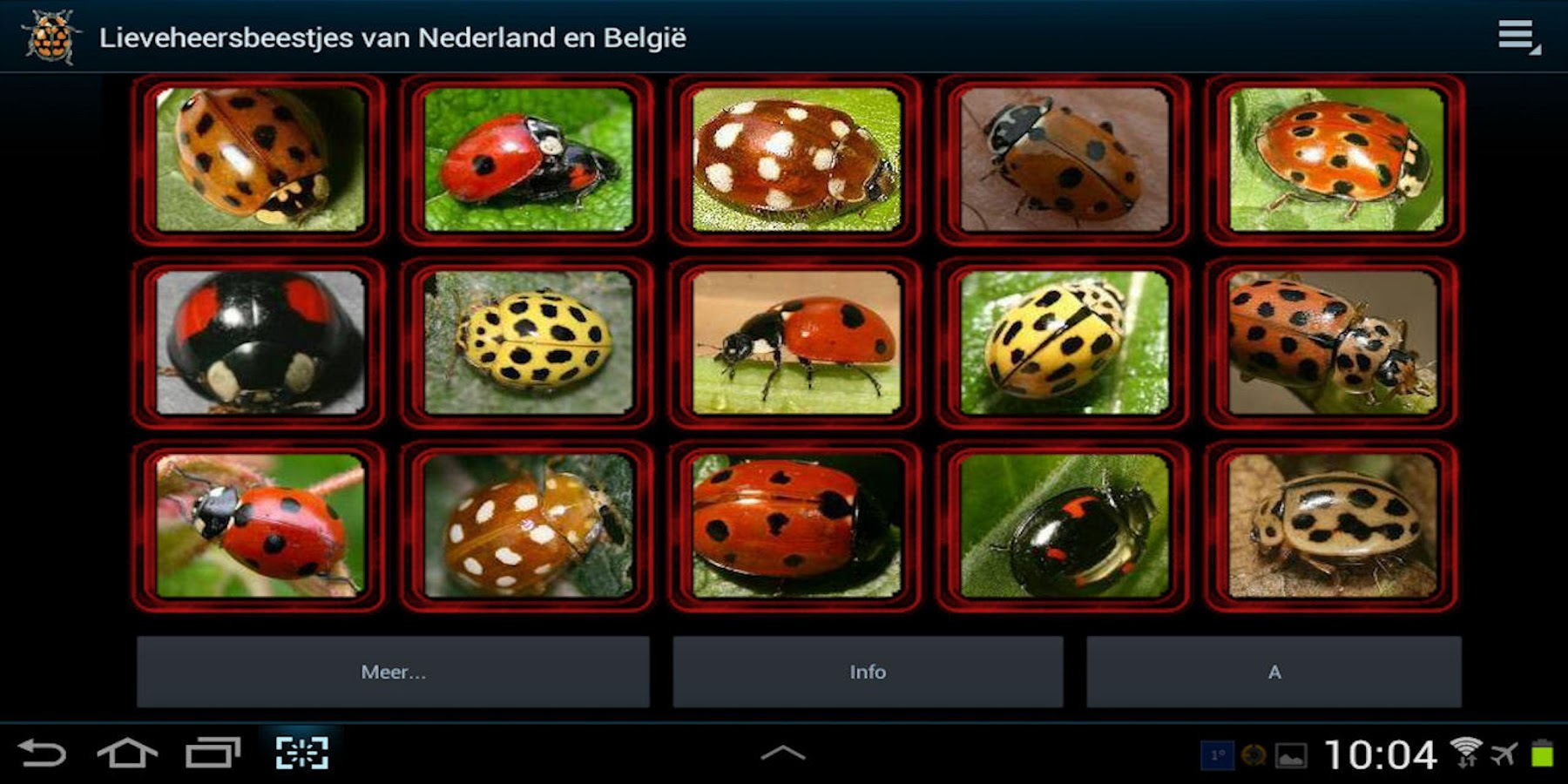 Lieveheersbeestjes in NL en BE- screenshot