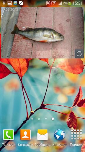 玩生活App|MP钓鱼照片的Widget免費|APP試玩