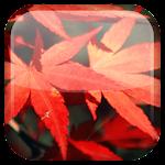 Autumn Live Wallpaper v1.0.4