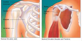 Термин вращающая манжета относится к 'манжете' мускулов и мягких тканей...