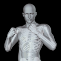 360° Anatomy for Artists: Male icon