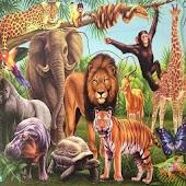 حديقة الحيوانات/Zoo