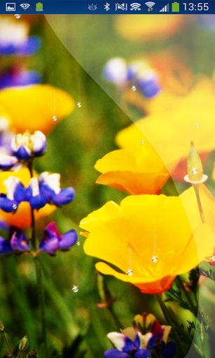 Spring Shamrock Live Wallpaper
