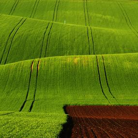 by Irena Brozova - Landscapes Prairies, Meadows & Fields (  )