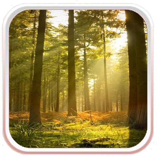 Sunny Forest Live Wallpaper LOGO-APP點子